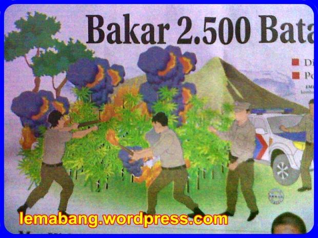 Bakar 2.500 Batang Ganja
