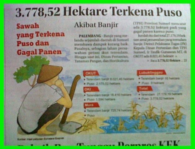 3.778,52 Hektare Terkena Puso