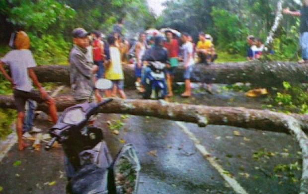 Angin Kencang, Pohon Besar Tumbang
